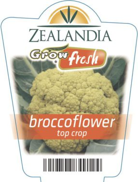Broccoflower Top Crop