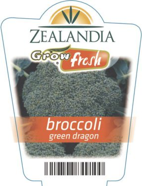Broccoli Green Dragon