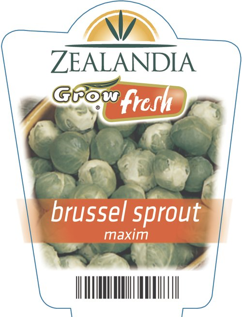Brussel Sprout Maxim