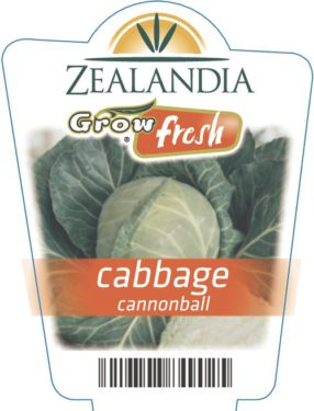 Cabbage Cannonball