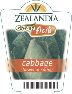 Cabbage Flower Of Spring