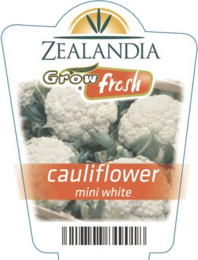 Cauliflower Mini White