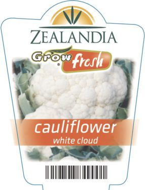 Cauliflower White Cloud