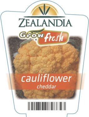 Cauliflower Cheddar