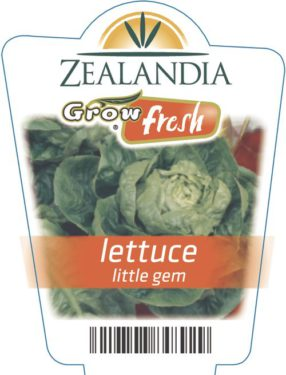Lettuce Little Gem