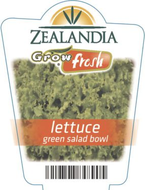 Lettuce Green Salad Bowl