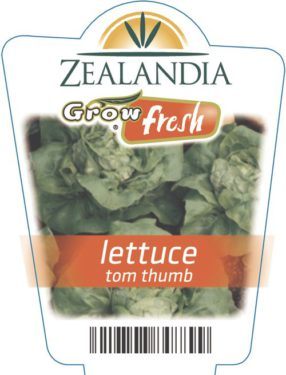 Lettuce Tom Thumb