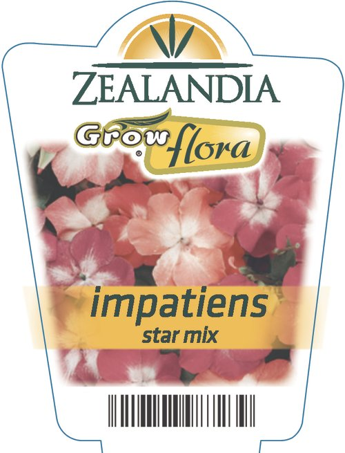 Impatiens Star Mix
