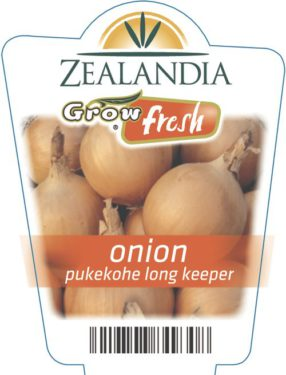 Onion Pukekohe Long Keeper