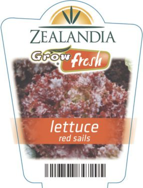 Lettuce Red Sails