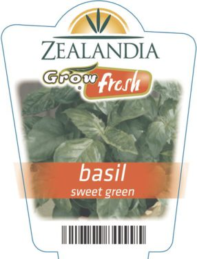 Basil Sweet Green