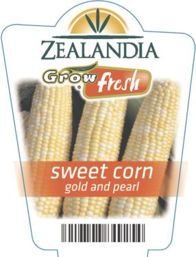 Sweet Corn Gold And Pearl