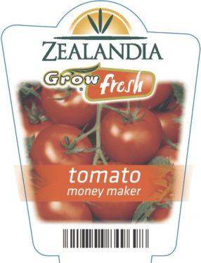Tomato Money Maker