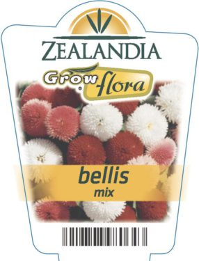 Bellis Mix