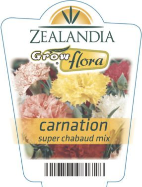 Carnation Super Chabaud Mix