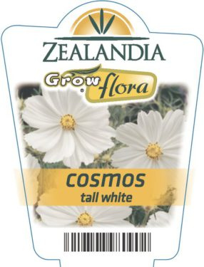 Cosmos Tall White