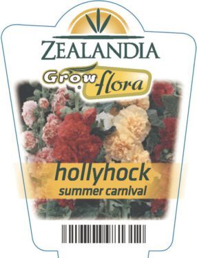 Hollyhock Summer Carnival