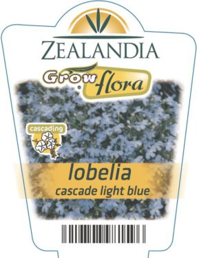 Lobelia Cascade Light Blue
