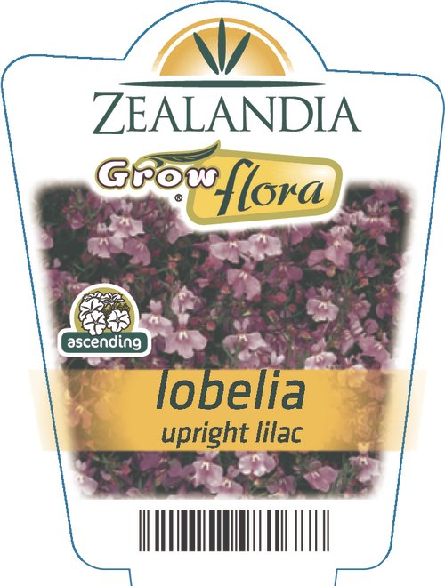Lobelia Upright Lilac
