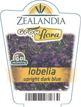 Lobelia Upright Dark Blue