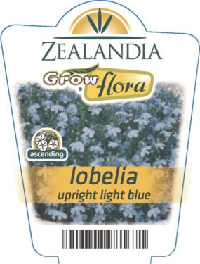 Lobelia Upright Light Blue
