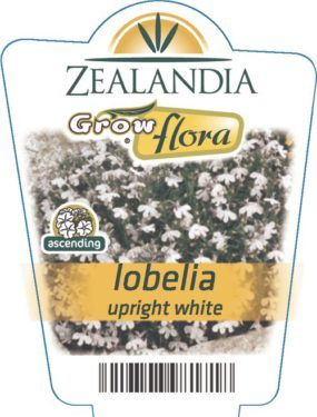 Lobelia Upright White
