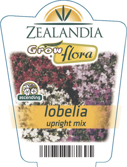 Lobelia Upright Mix