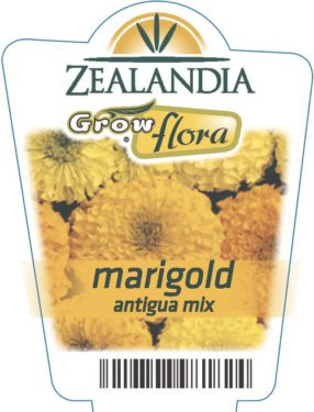 Marigold Antigua Mix
