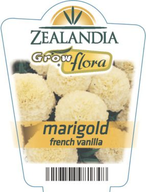 Marigold French Vanilla