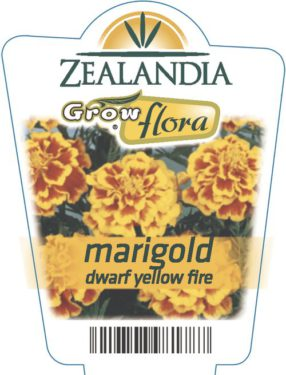 Marigold Dwarf Yellow Fire