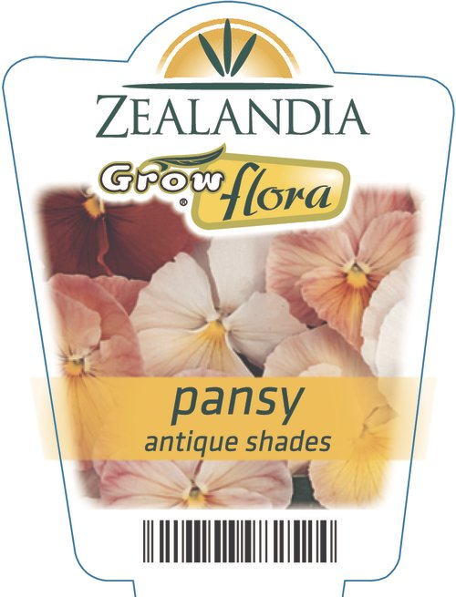 Pansy Antique Shades