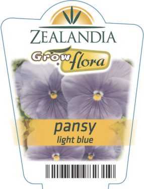 Pansy Light Blue