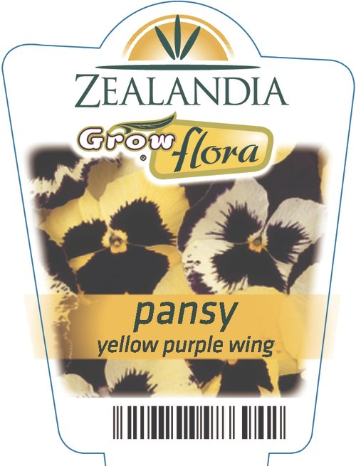 Pansy Yellow Purple Wing