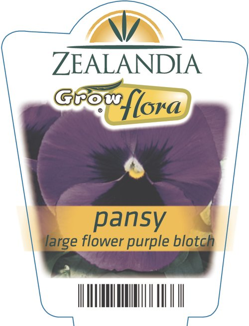 Pansy Large Flower Purple Blotch