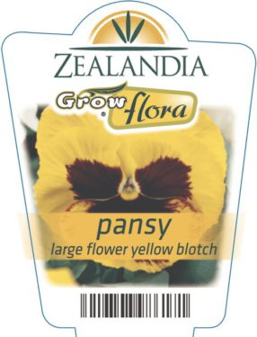 Pansy Large Flower Yellow Blotch