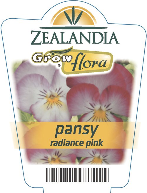 Pansy Radiance Pink