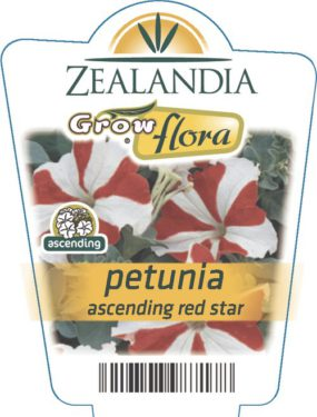 Petunia Ascending Red Star