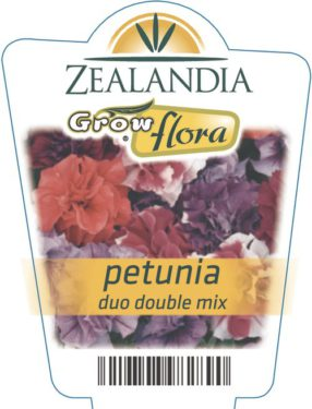 Petunia Duo Double Mix