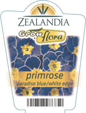 Primrose Paradise Blue/white Edge