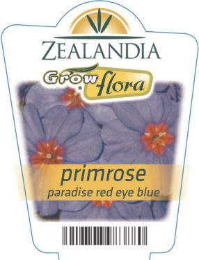 Primrose Paradise Red Eye Blue