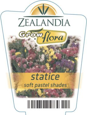 Statice Soft Pastel Shades