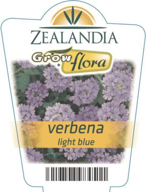 Verbena Light Blue
