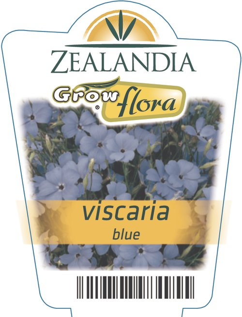 Viscaria Blue