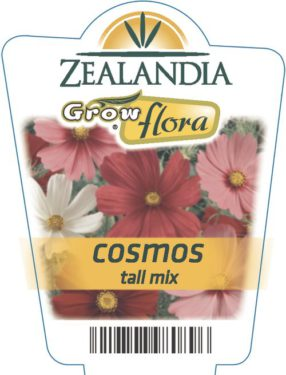 Cosmos Tall Mix
