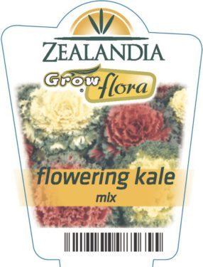 Flowering Kale Mix