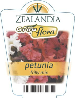 Petunia Frilly Mix