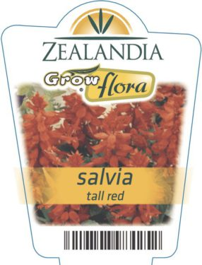 Salvia Tall Red