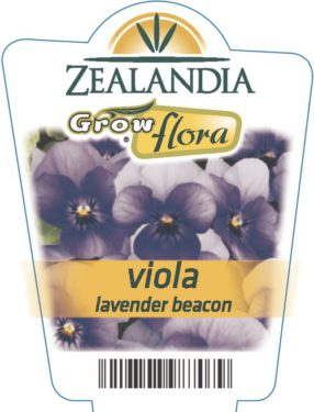 Viola Lavender Beacon