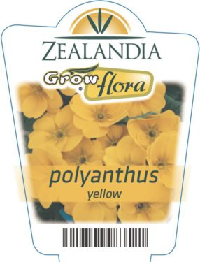 Polyanthus Yellow