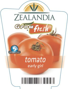 tomato early girl